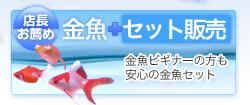 金魚セット販売